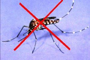 Muỗi và sức khỏe con người