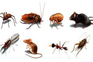 Côn trùng cắn và cách xử trí